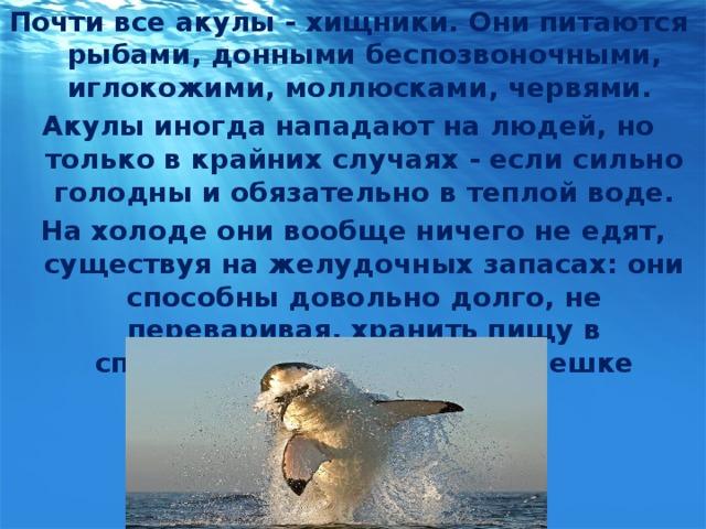 Почти все акулы - хищники. Они питаются рыбами, донными беспозвоночными, иглокожими, моллюсками, червями. Акулы иногда нападают на людей, но только в крайних случаях - если сильно голодны и обязательно в теплой воде.  На холоде они вообще ничего не едят, существуя на желудочных запасах: они способны довольно долго, не переваривая, хранить пищу в специальном желудочном мешке