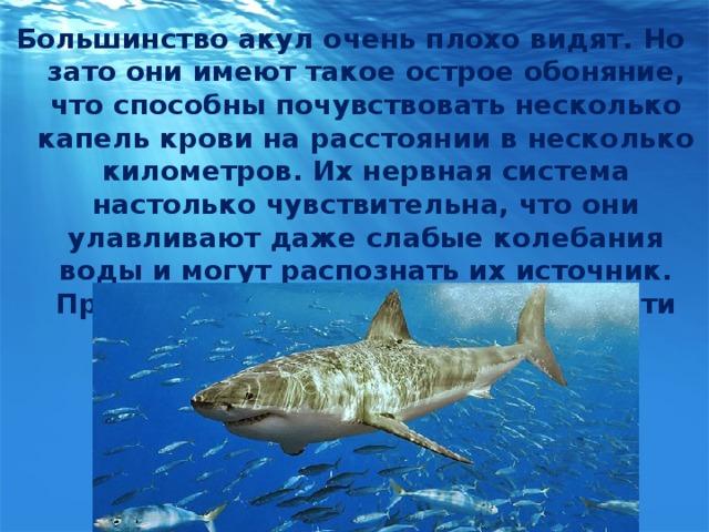 Большинство акул очень плохо видят. Но зато они имеют такое острое обоняние, что способны почувствовать несколько капель крови на расстоянии в несколько километров. Их нервная система настолько чувствительна, что они улавливают даже слабые колебания воды и могут распознать их источник. При этом сами акулы двигаются почти бесшумно.