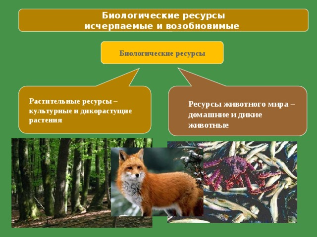 Биологические ресурсы исчерпаемые и возобновимые Биологические ресурсы Растительные ресурсы – культурные и дикорастущие растения Ресурсы животного мира – домашние и дикие животные