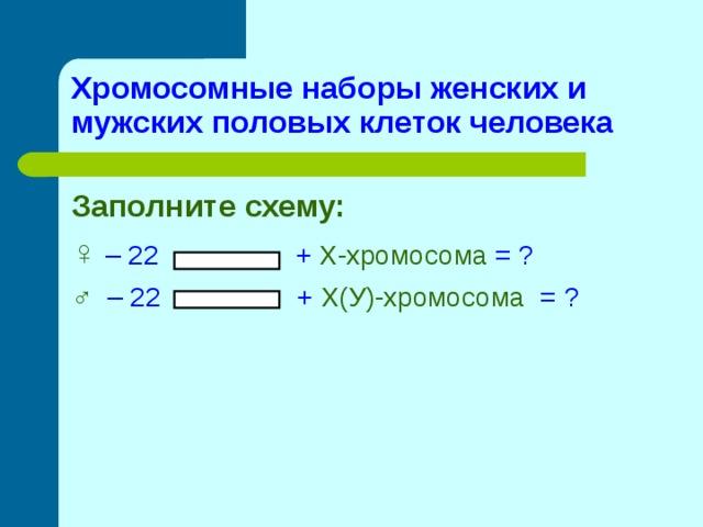 Хромосомные наборы женских и мужских половых клеток человека Заполните схему: ♀ – 22 + Х-хромосома = ? ♂  – 22 + Х(У)-хромосома = ?