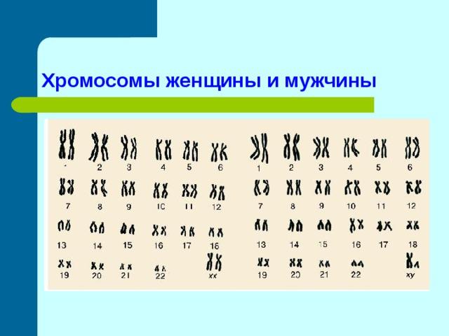 Хромосомы женщины и мужчины