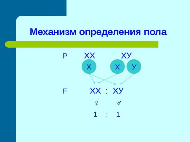 Механизм определения пола  Р ХХ ХУ  F  ХХ : ХУ  ♀ ♂  1 : 1 Х Х У