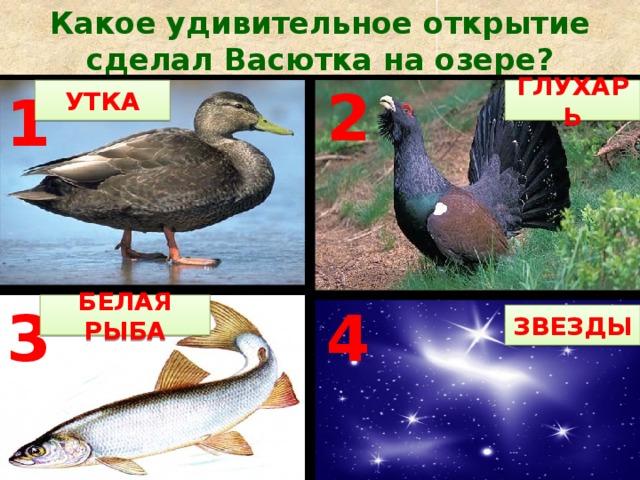 Какое удивительное открытие сделал Васютка на озере? УТКА ГЛУХАРЬ 2 1 БЕЛАЯ РЫБА 4 3 ЗВЕЗДЫ БЕЛАЯ РЫБА 3