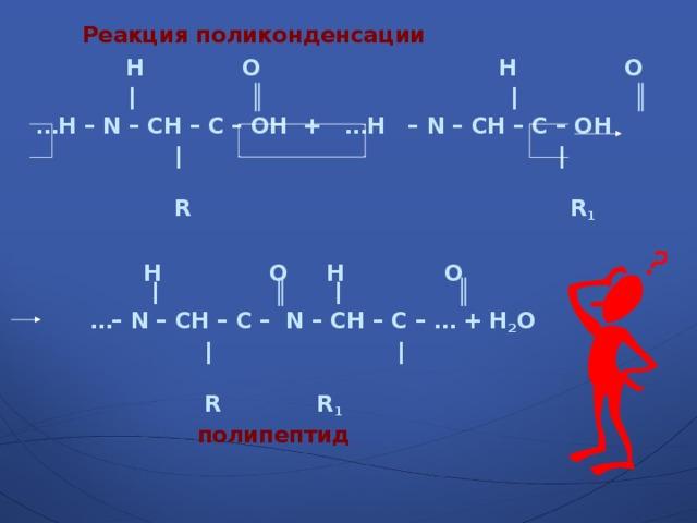 Реакция поликонденсации  H  O  H  O  |  ║  |  ║ … H – N – CH – C – OH  +  …H  – N – CH – C – OH    |    |     R     R 1   H  O  H  O  |  ║  |  ║  …– N – CH – C – N – CH – C – … + H 2 O    |  |      R      R 1    полипептид