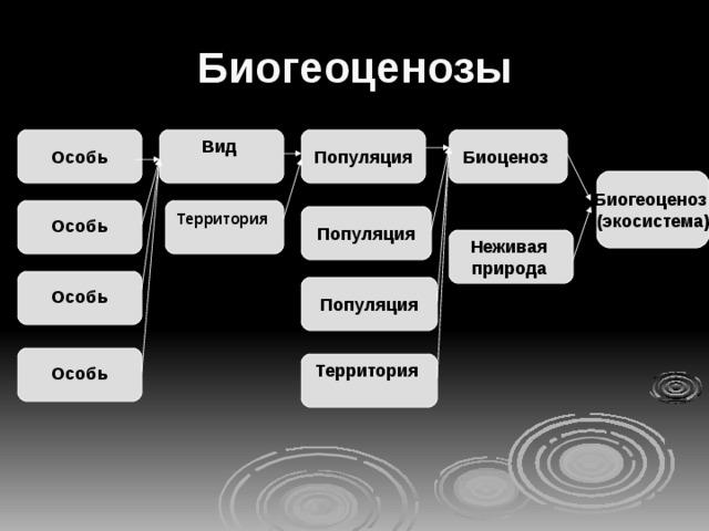 Биогеоценозы Популяция Биоценоз Вид   Особь  Биогеоценоз (экосистема) Территория   Особь  Популяция Неживая природа   Особь  Популяция  Особь  Территория