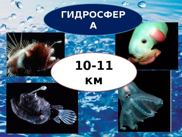 ГИДРОСФЕРА 10-11 км