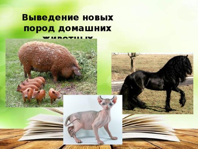 Выведение новых пород домашних животных