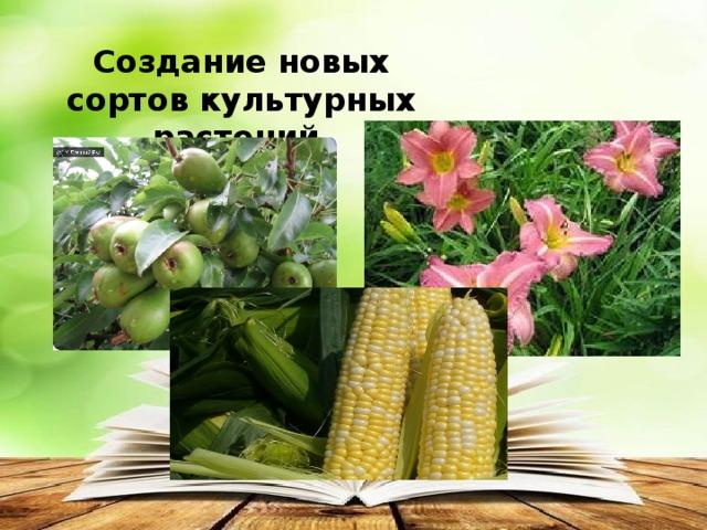 Создание новых сортов культурных растений