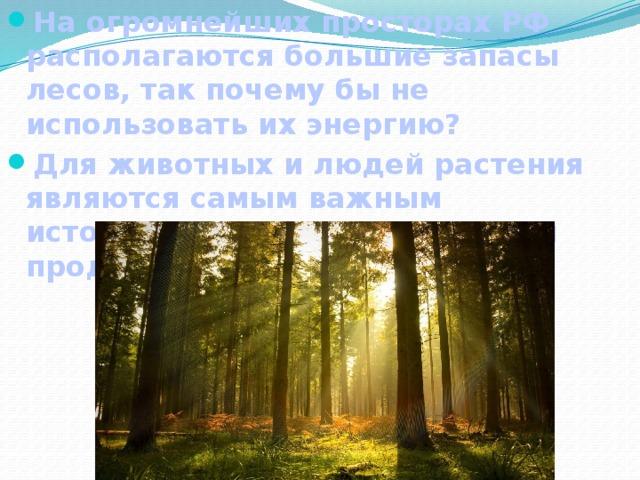На огромнейших просторах РФ располагаются большие запасы лесов, так почему бы не использовать их энергию? Для животных и людей растения являются самым важным источником энергии и пищевым продуктом.