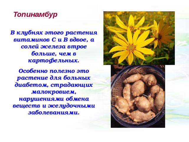 Топинамбур В клубнях этого растения витаминов С и В вдвое, а солей железа втрое больше, чем в картофельных. Особенно полезно это растение для больных диабетом, страдающих малокровием, нарушениями обмена веществ и желудочными заболеваниями.
