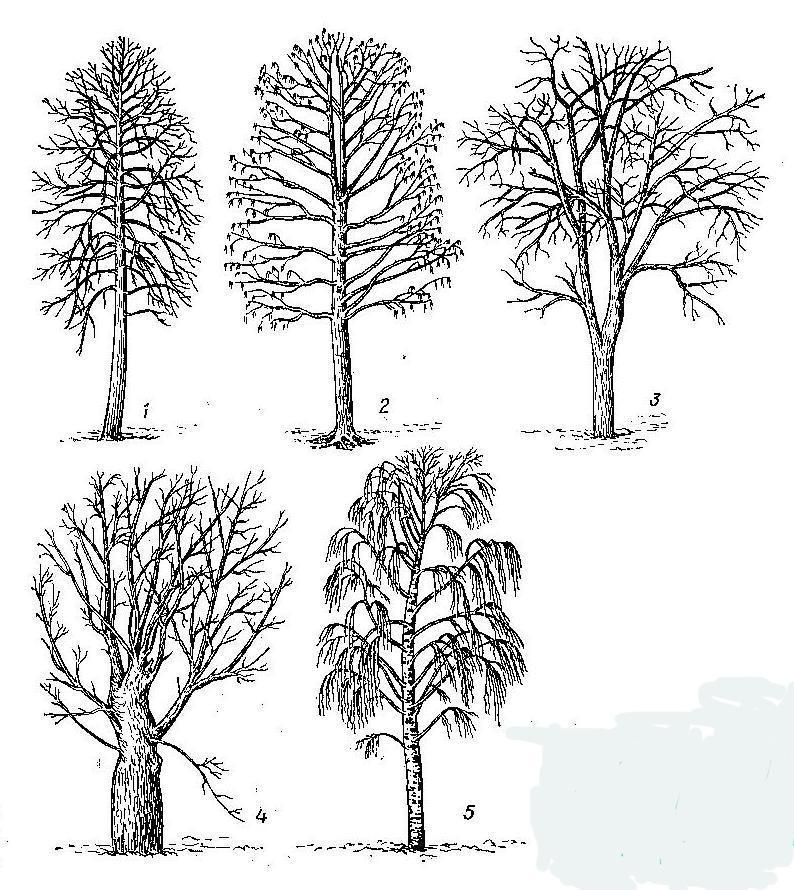 культурой деревья в картинках их сборка было очень тяжело