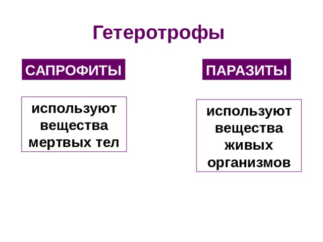 Гетеротрофы САПРОФИТЫ ПАРАЗИТЫ используют вещества мертвых тел используют вещества живых организмов