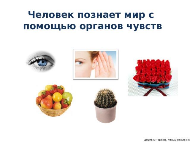 Человек познает мир с  помощью органов чувств  Дмитрий Тарасов, http://videouroki.net