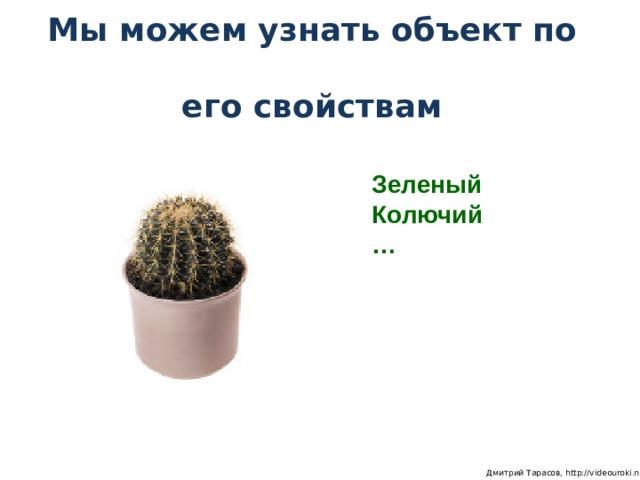 Мы можем узнать объект по  его свойствам Зеленый Колючий …  Дмитрий Тарасов, http://videouroki.net