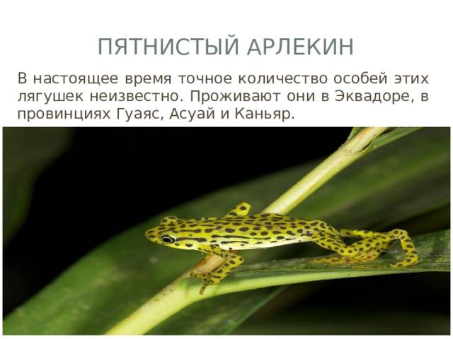 Пятнистый арлекин В настоящее время точное количество особей этих лягушек неизвестно. Проживают они в Эквадоре, в провинциях Гуаяс, Асуай и Каньяр.