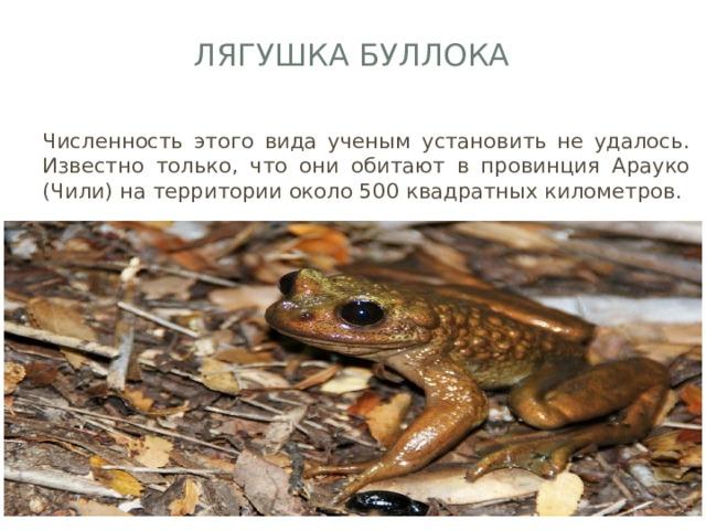 Лягушка Буллока   Численность этого вида ученым установить не удалось. Известно только, что они обитают в провинция Арауко (Чили) на территории около 500 квадратных километров.