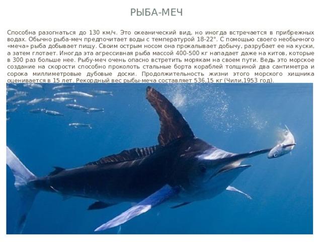 Рыба-меч Способна разогнаться до 130 км/ч. Это океанический вид, но иногда встречается в прибрежных водах. Обычно рыба-меч предпочитает воды с температурой 18-22°. С помощью своего необычного «меча» рыба добывает пищу. Своим острым носом она прокалывает добычу, разрубает ее на куски, а затем глотает. Иногда эта агрессивная рыба массой 400-500 кг нападает даже на китов, которые в 300 раз больше нее. Рыбу-меч очень опасно встретить морякам на своем пути. Ведь это морское создание на скорости способно проколоть стальные борта кораблей толщиной два сантиметра и сорока миллиметровые дубовые доски. Продолжительность жизни этого морского хищника оценивается в 15 лет. Рекордный вес рыбы-меча составляет 536,15 кг (Чили,1953 год).