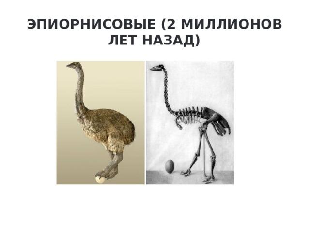 Эпиорнисовые (2 миллионов лет назад)