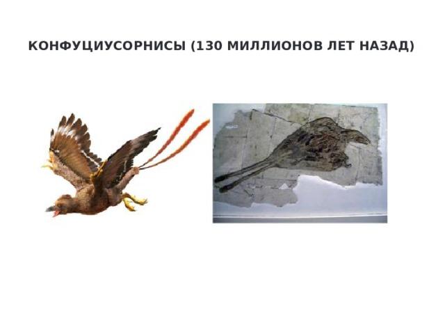 Конфуциусорнисы (130 миллионов лет назад)