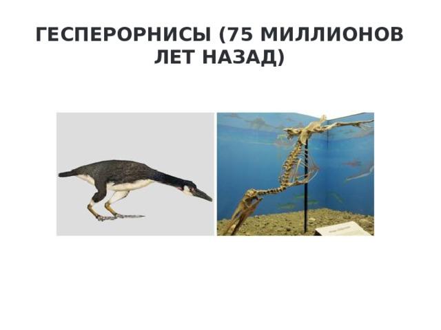 Гесперорнисы (75 миллионов лет назад)