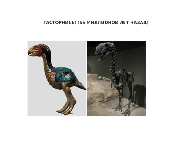 Гасторнисы (55 миллионов лет назад)