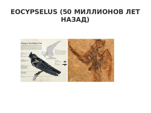 Eocypselus (50 миллионов лет назад)