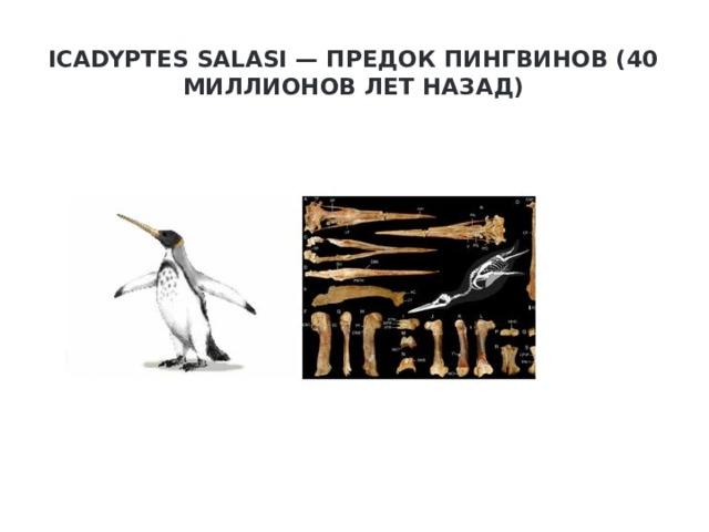 Icadyptes salasi — предок пингвинов (40 миллионов лет назад)