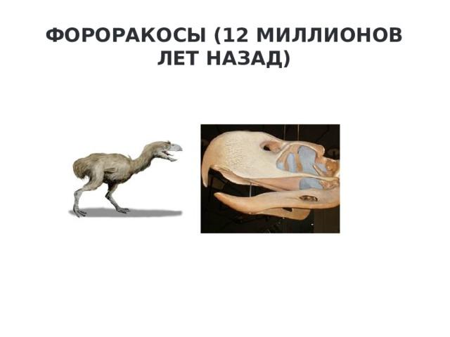 Фороракосы (12 миллионов лет назад)