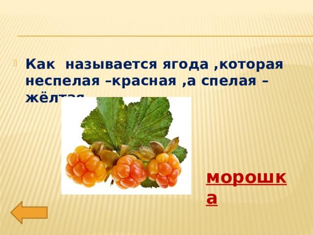 Как называется ягода ,которая неспелая –красная ,а спелая –жёлтая. морошка