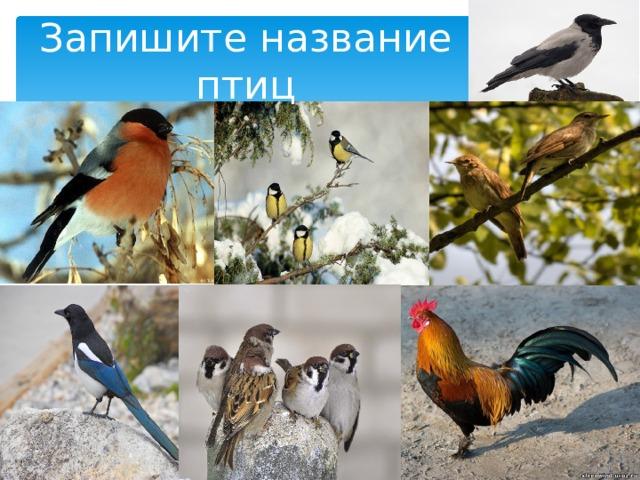 Запишите название птиц