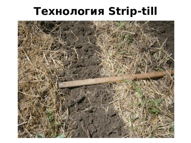 Технология Strip-till