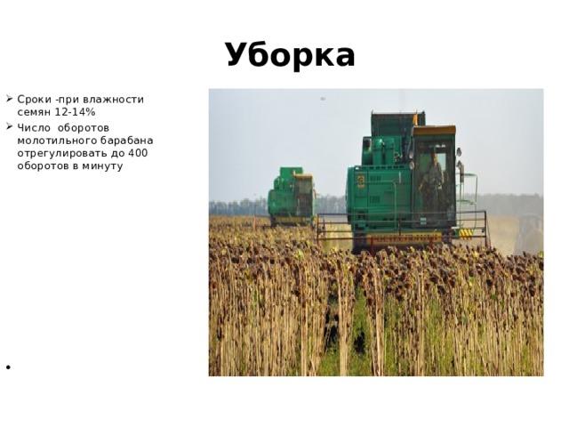 Уборка Сроки -при влажности семян 12-14% Число оборотов молотильного барабана отрегулировать до 400 оборотов в минуту