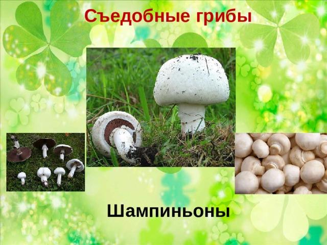 Съедобные грибы   Шампиньоны
