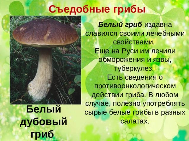 Съедобные грибы   Белый гриб издавна славился своими лечебными свойствами. Еще на Руси им лечили обморожения и язвы, туберкулез. Есть сведения о противоонкологическом действии гриба. В любом случае, полезно употреблять сырые белые грибы в разных салатах.   Белый дубовый гриб