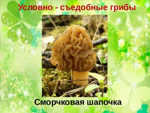 Условно - съедобные грибы   Сморчковая шапочка
