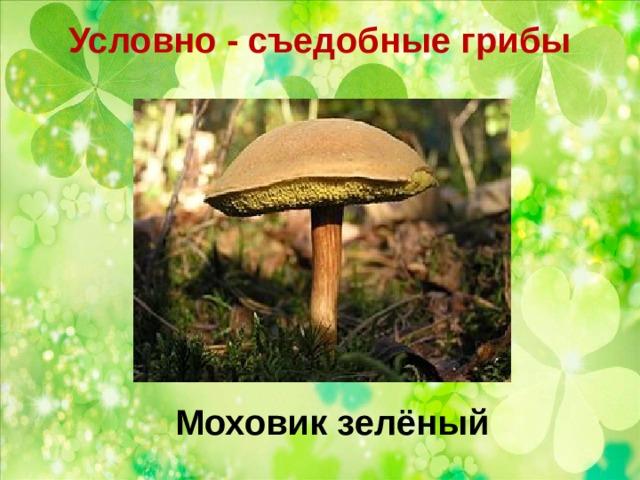 Условно - съедобные грибы   Моховик зелёный