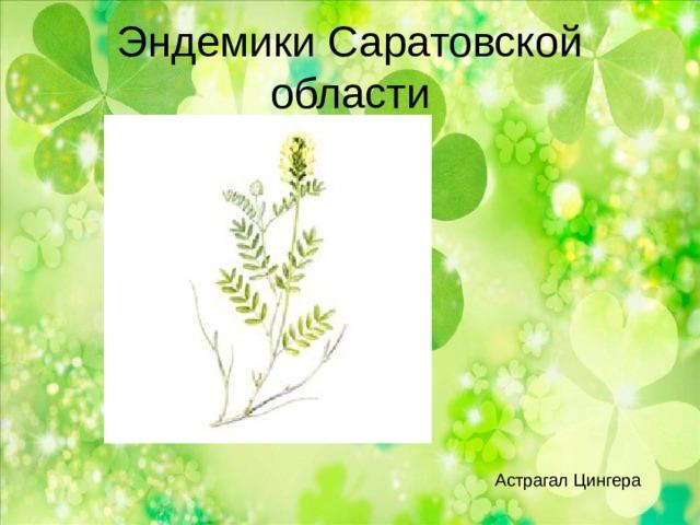 Эндемики Саратовской области Астрагал Цингера