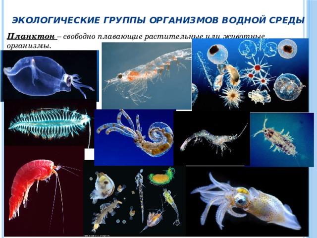 Экологические группы организмов водной среды Планктон – свободно плавающие растительные или животные организмы.