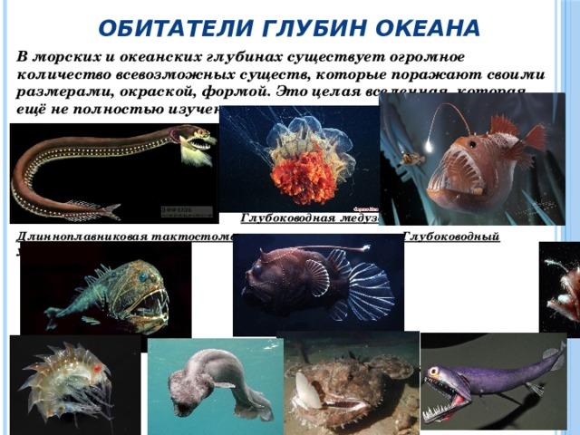 Обитатели глубин океана В морских и океанских глубинах существует огромное количество всевозможных существ, которые поражают своими размерами, окраской, формой. Это целая вселенная, которая ещё не полностью изучена.      Глубоководная медуза Длинноплавниковая тактостома  Глубоководный удильщик