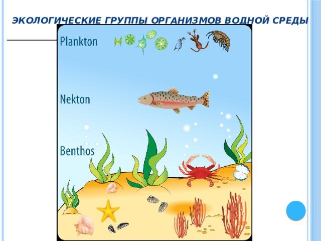 Экологические группы организмов водной среды