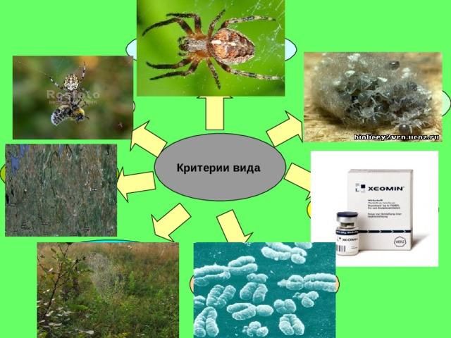 Морфологический  Физиологический  Этологический  Критерии вида  Географический  Биохимический  Экологический  Генетический