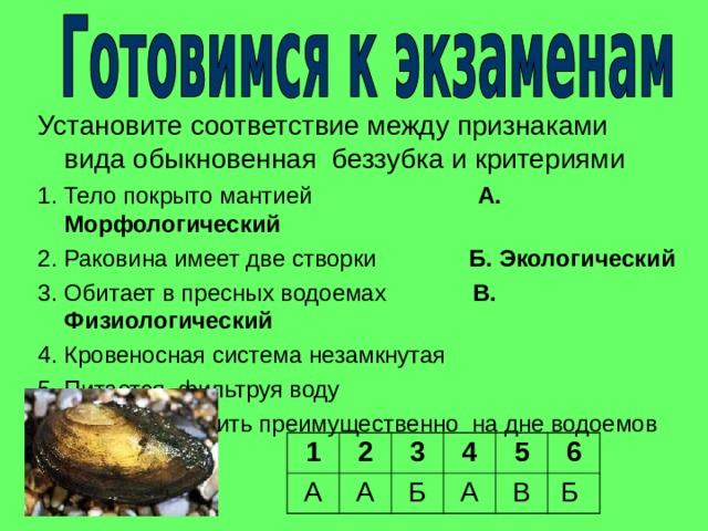 Установите соответствие между признаками вида обыкновенная беззубка и критериями 1. Тело покрыто мантией А. Морфологический  2. Раковина имеет две створки Б. Экологический 3. Обитает в пресных водоемах В. Физиологический 4. Кровеносная система незамкнутая 5. Питается, фильтруя воду 6. Можно встретить преимущественно на дне водоемов 1 А 2 3 А 4 Б 5 А В 6 Б