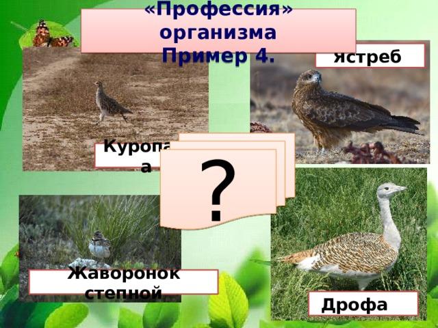 «Профессия» организма Пример 4. Ястреб ? Куропатка Жаворонок степной Дрофа