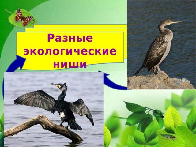 Разные экологические ниши