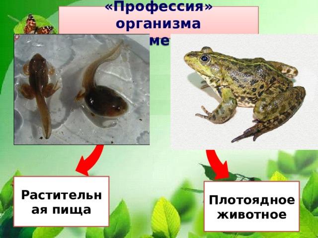 «Профессия» организма Пример 8. Растительная пища Плотоядное животное