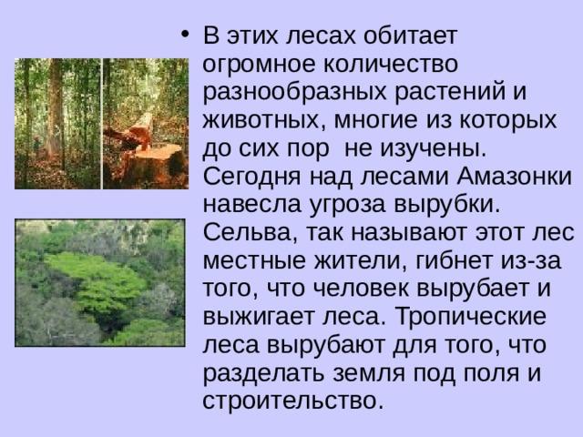В этих лесах обитает огромное количество разнообразных растений и животных, многие из которых до сих пор не изучены. Сегодня над лесами Амазонки навесла угроза вырубки. Сельва, так называют этот лес местные жители, гибнет из-за того, что человек вырубает и выжигает леса. Тропические леса вырубают для того, что разделать земля под поля и строительство.