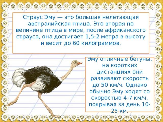 Страус Эму — это большая нелетающая австралийская птица. Это вторая по величине птица в мире, после африканского страуса, она достигает 1,5-2 метра в высоту и весит до 60 килограммов. Эму отличные бегуны, на коротких дистанциях они развивают скорость до 50 км/ч. Однако обычно Эму ходят со скоростью 4-7 км/ч, покрывая за день 10-25 км.