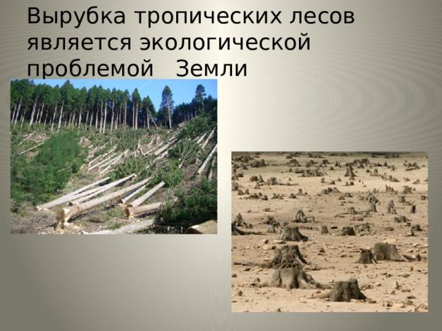 Вырубка тропических лесов является экологической проблемой Земли