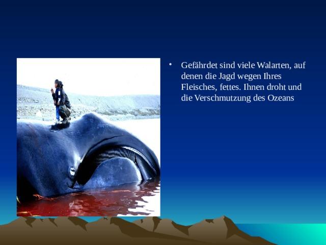 Gefährdet sind viele Walarten, auf denen die Jagd wegen Ihres Fleisches, fettes. Ihnen droht und die Verschmutzung des Ozeans
