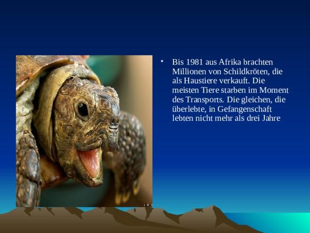 Bis 1981 aus Afrika brachten Millionen von Schildkröten, die als Haustiere verkauft. Die meisten Tiere starben im Moment des Transports. Die gleichen, die überlebte, in Gefangenschaft lebten nicht mehr als drei Jahre